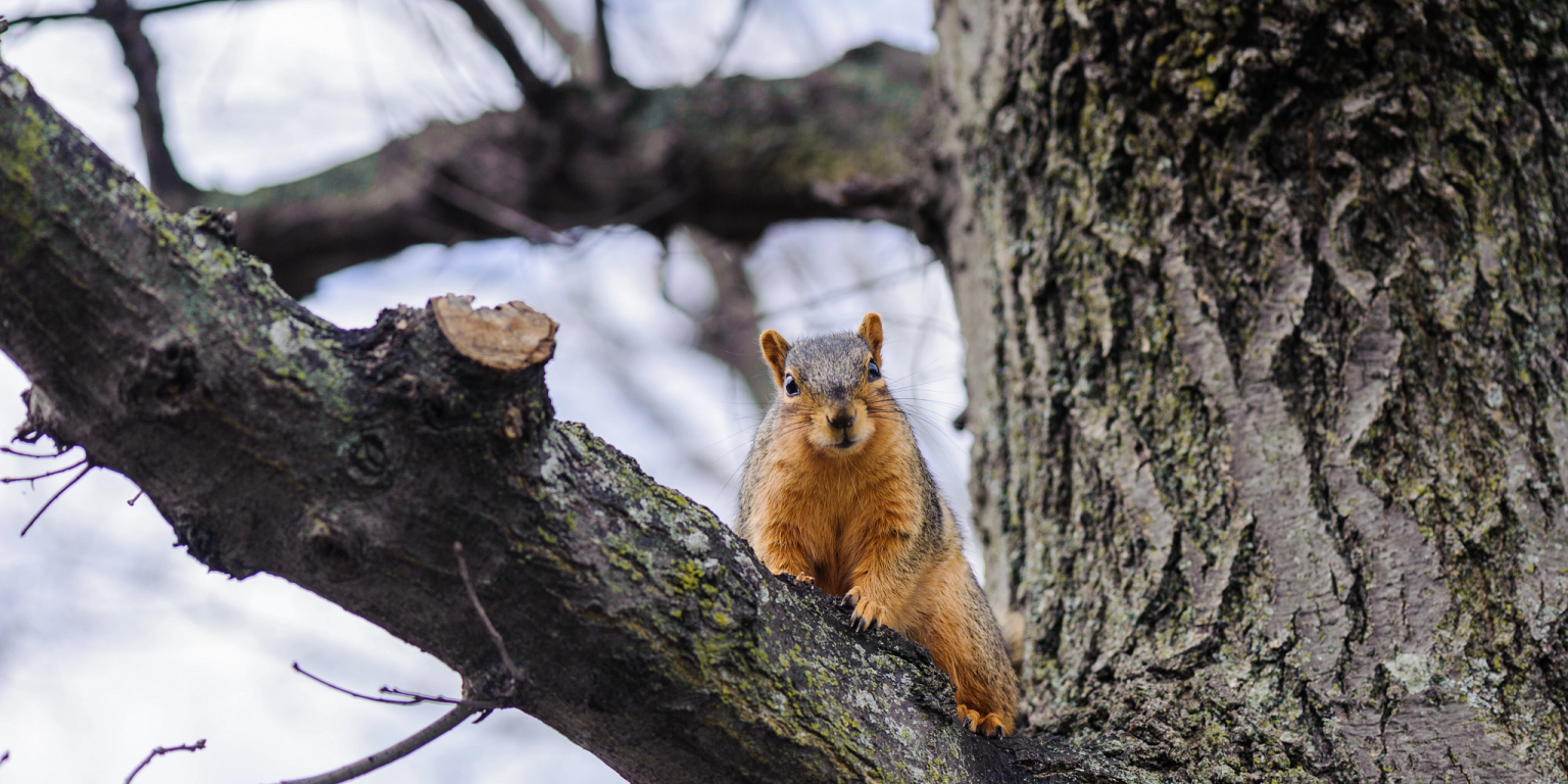 a squirrel sits in a tree
