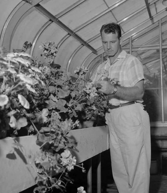 Hugh Wallace Scales tends to flowers in a greenhouse
