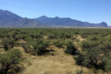 A view of small vegetation and mountains in a dryland region