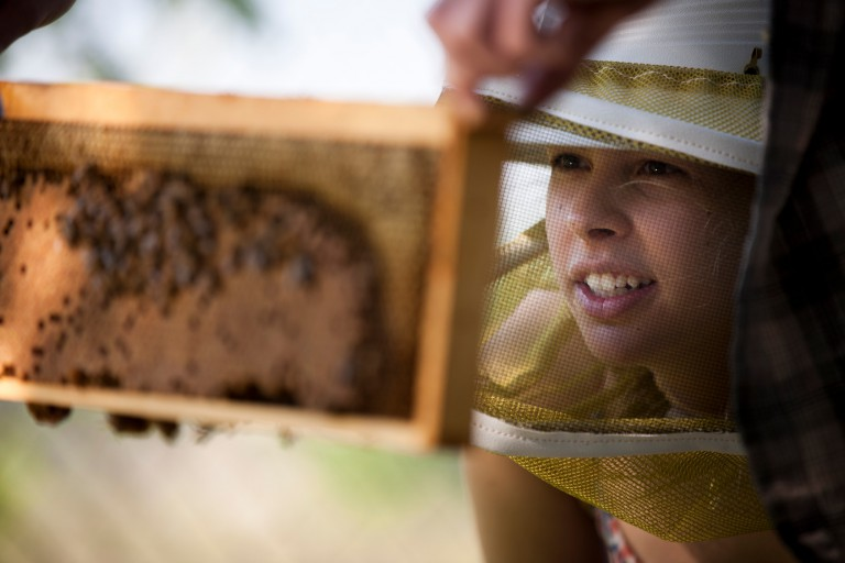Ellie Symes, co-founder and CEO of The Bee Corp., inspects a frame from a honeybee hive