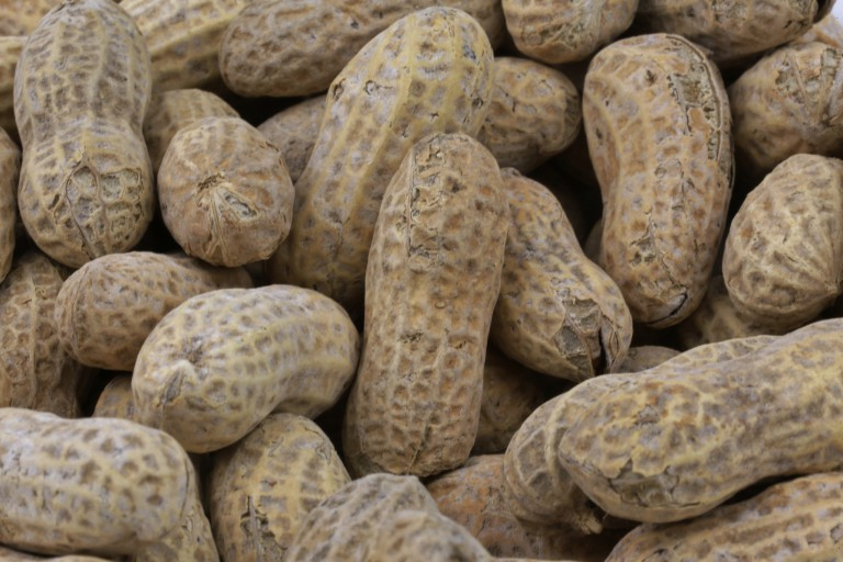 A pile of peanuts in their shells