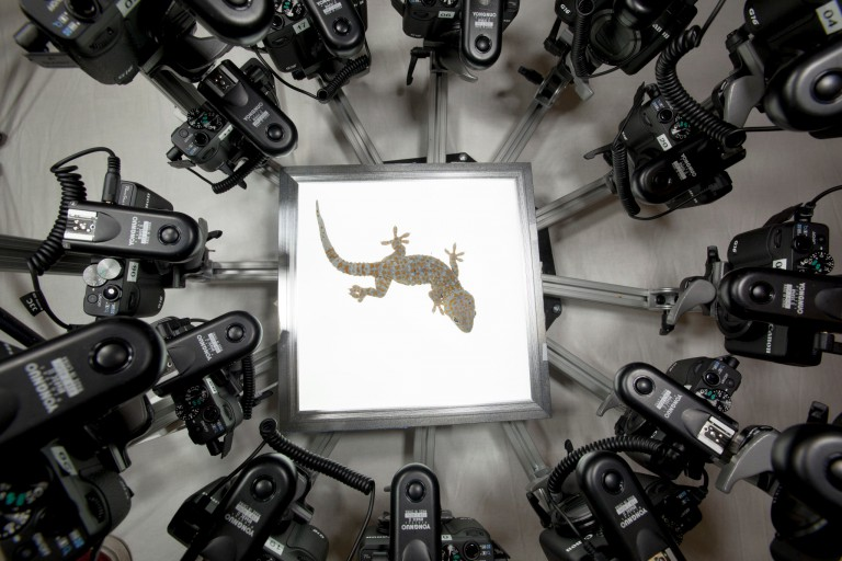 An overview of a lizard in an array of cameras.
