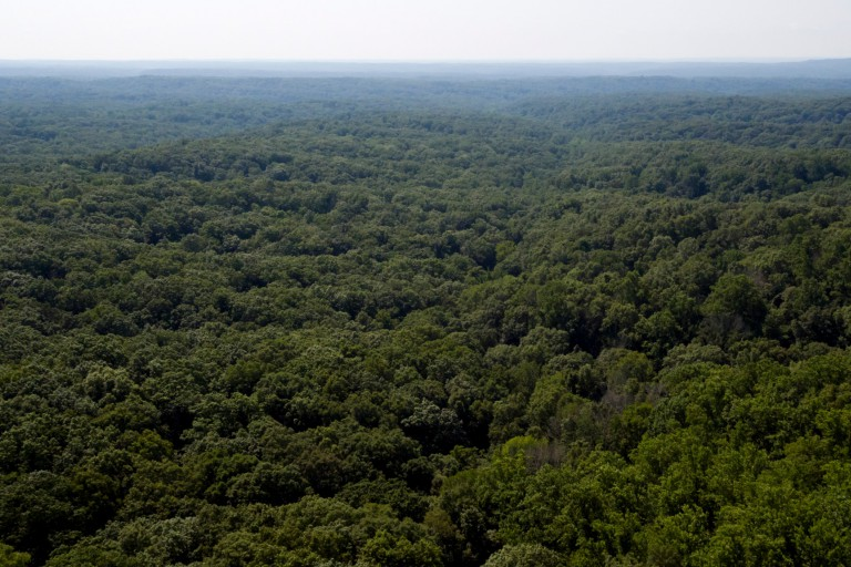 Aerial shot of a forest