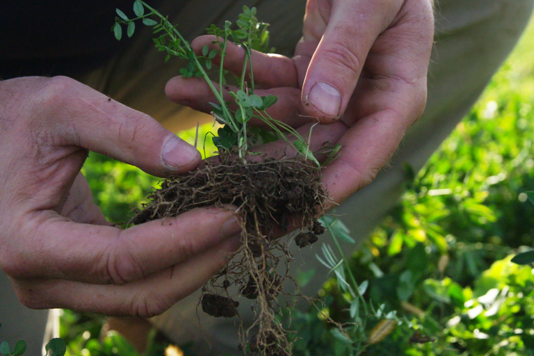 Hands hold a green plant in soil
