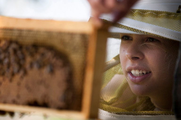 IU alumna Ellie Symes examines a frame from a honeybee hive.