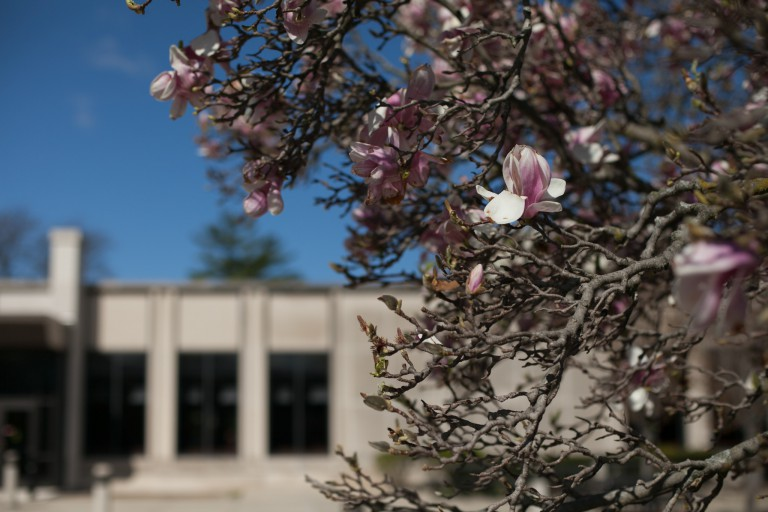 A flower blooms on a tree on the IU South Bend campus