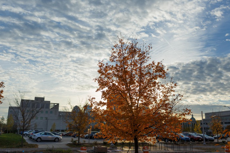 A tree on the IUPUI campus in the autumn