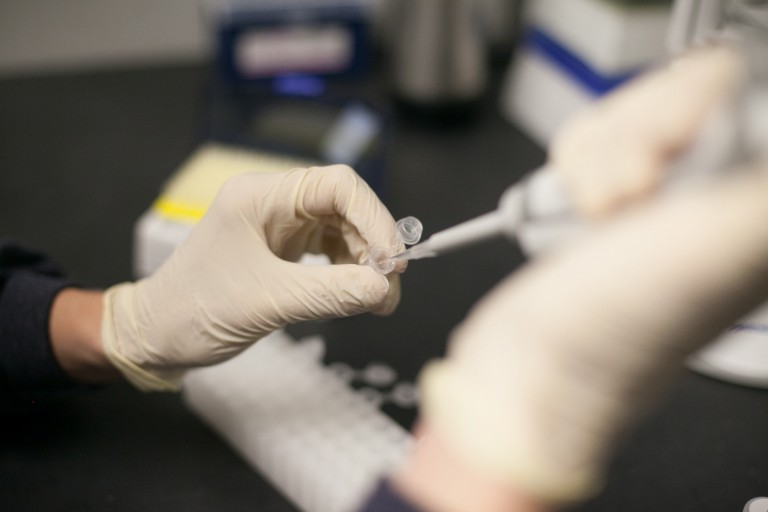 A researcher uses a syringe to add liquid to a text sample
