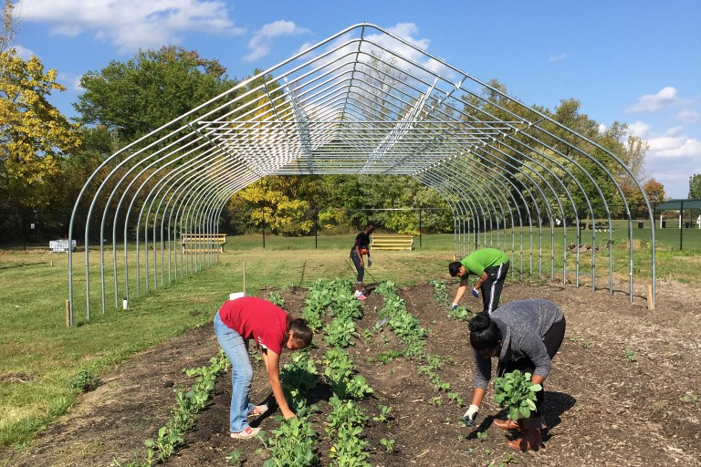 Four IUPUI students work on an urban farming project as part of Fall Alternative Break.