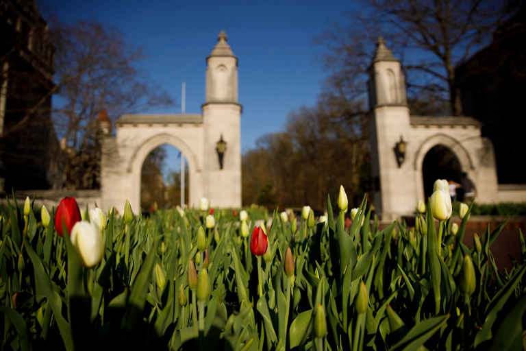 Tulips are pictured near the Sample Gates on a spring day at Indiana University Bloomington