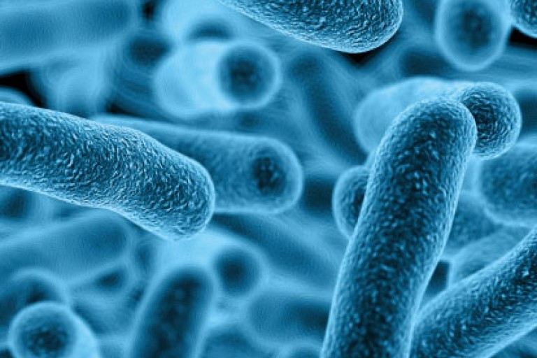 Blue bacteria by ThinkStock