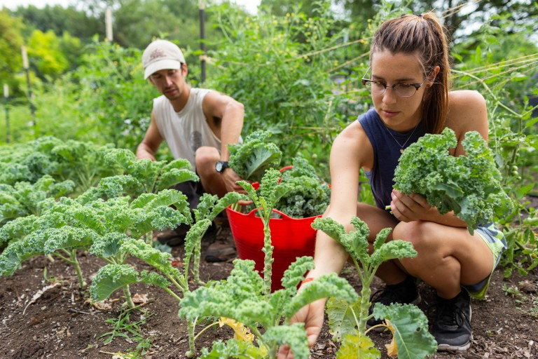 Two people work in a vegetable garden.