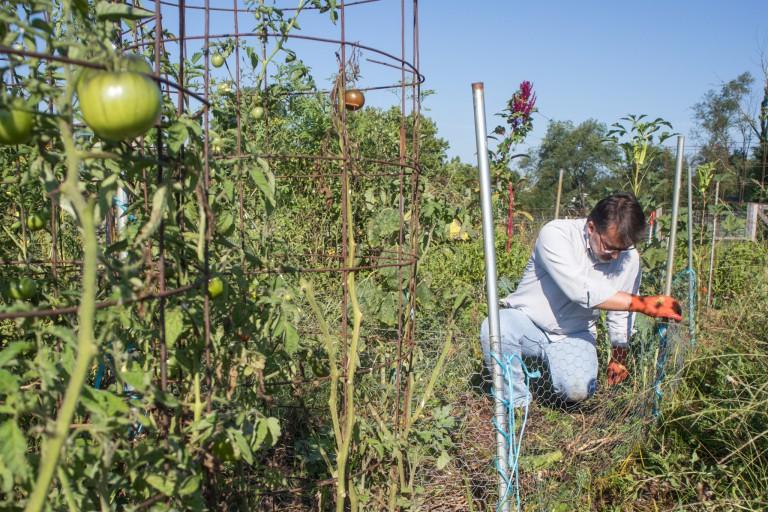 Lino Mioni works in his garden plot at Hilltop Garden