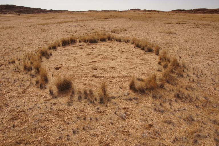 Fairy circle in Namib Desert.