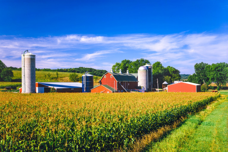 A red barn and corn fields on a sunny day