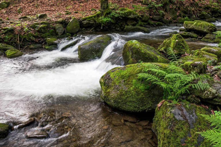 Stream flows over mossy rocks