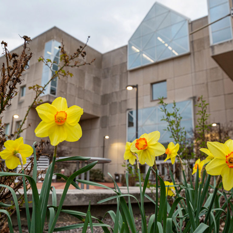 university library with daffodils blooming in front of it