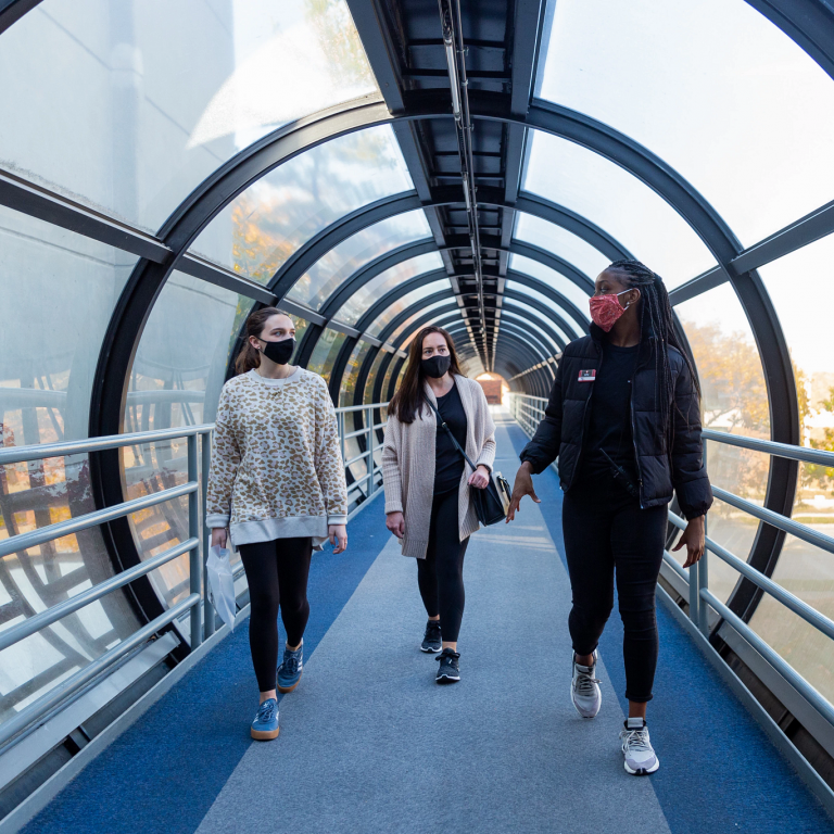 a tour guide leads guests through an elevated walking tunnel; everyone is wearing a mask