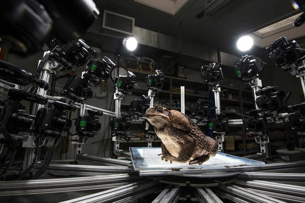 A toad in an array of cameras.