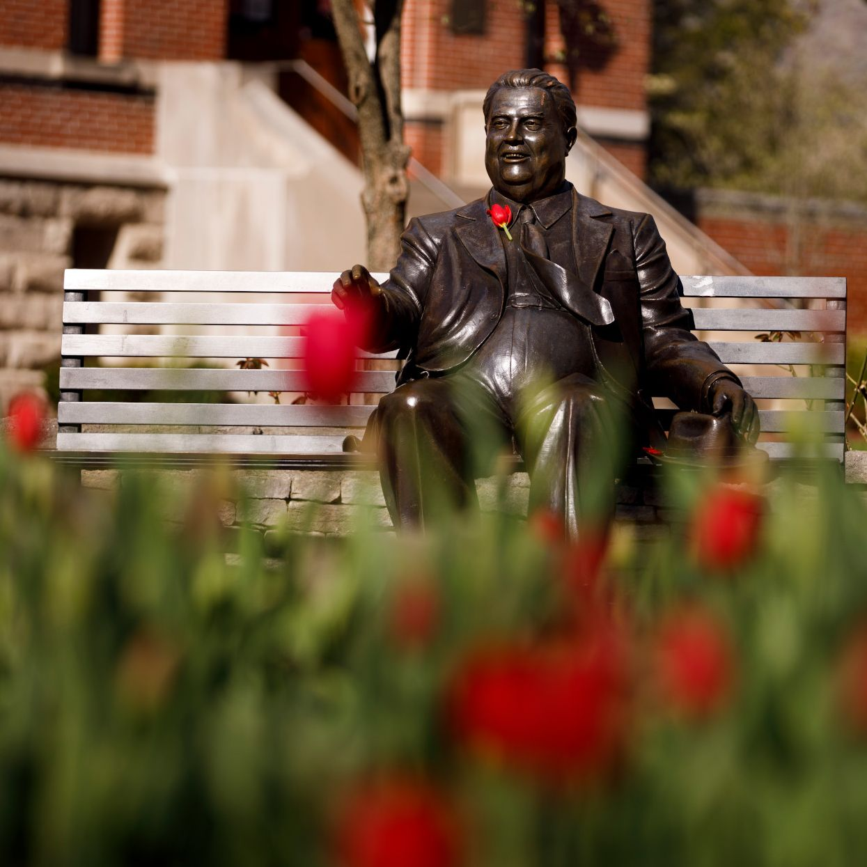 Red tulips bloom in front of the Herman B Wells statue.