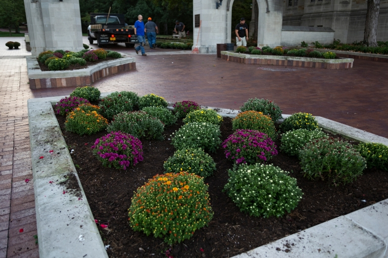Fall mums at the Sample Gates