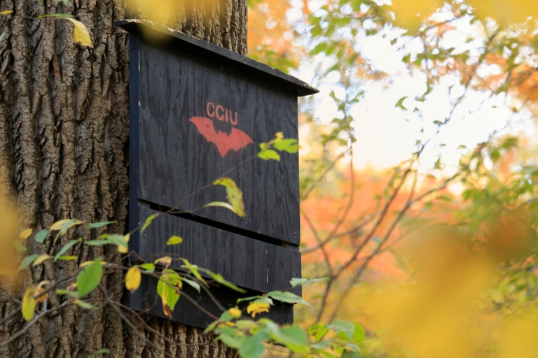 A bat box in Dunn's Woods on the IU Bloomington campus.