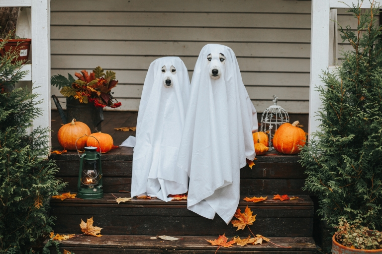 Two dogs sit on a front porch of a house dressed as ghosts for Halloween.