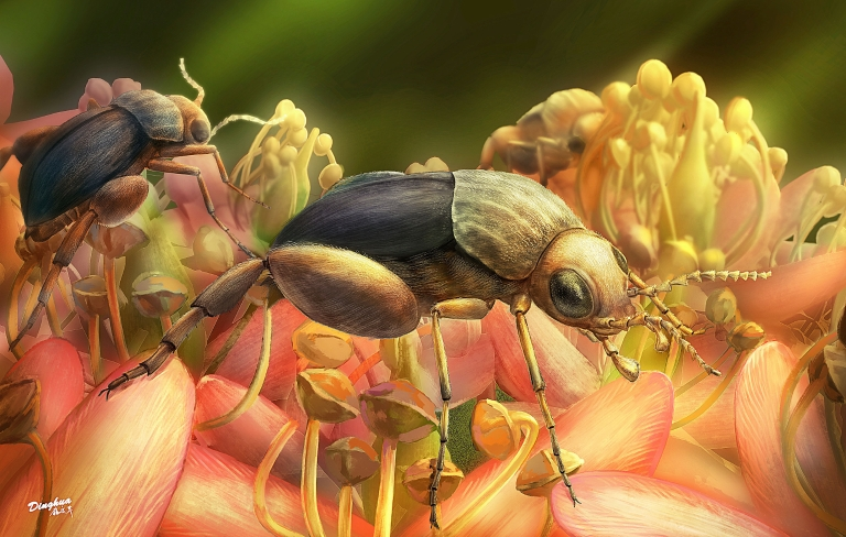 An artist's rendering of A. burmitina feeding on eudicot flowers