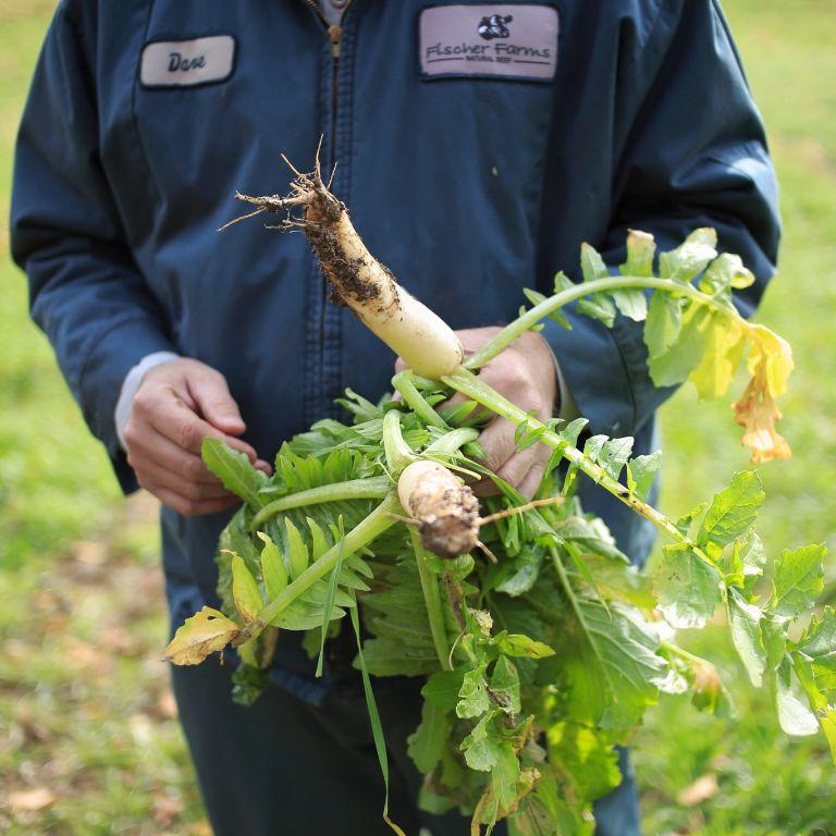 Dave Fischer holds a radish
