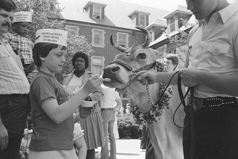 A kid feeds a cow