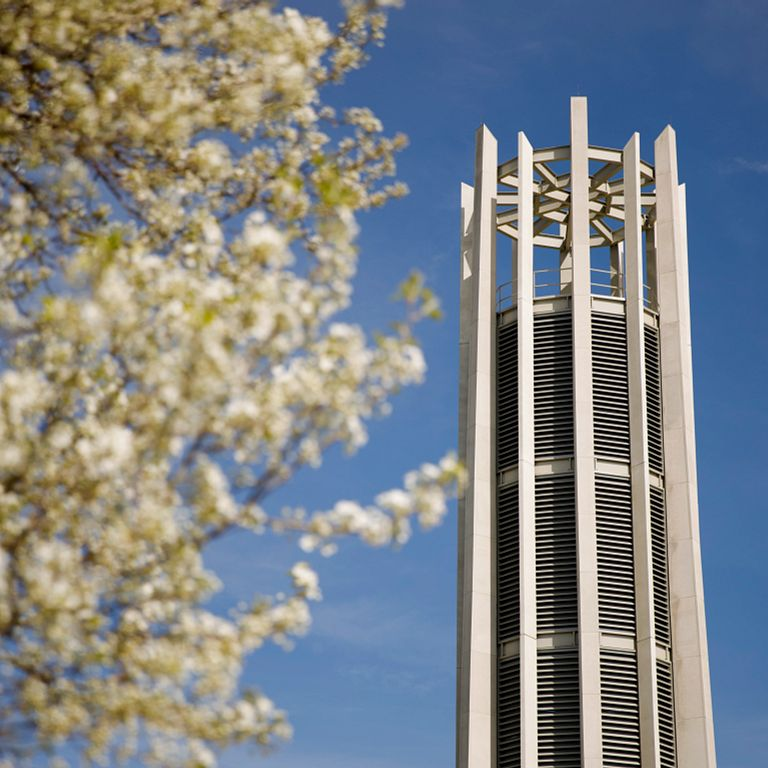 A flowering tree in front of the carillon