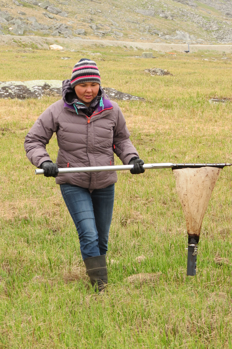 A researcher collects invertebrates with a long tool