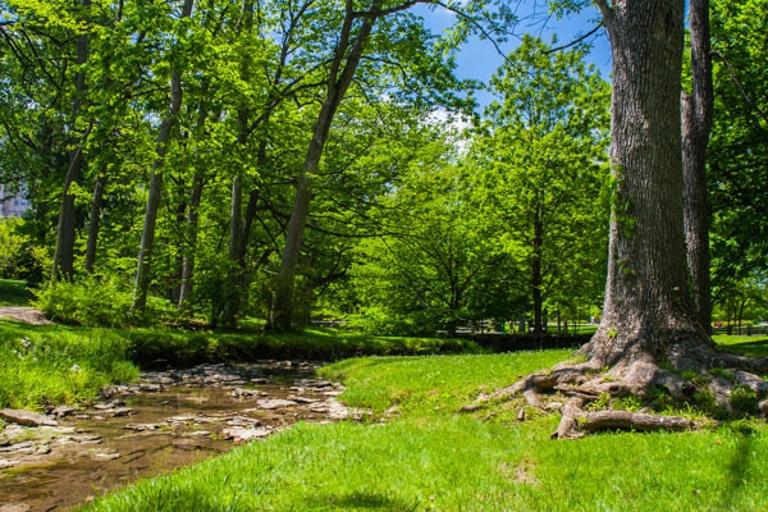 Jordan River trees
