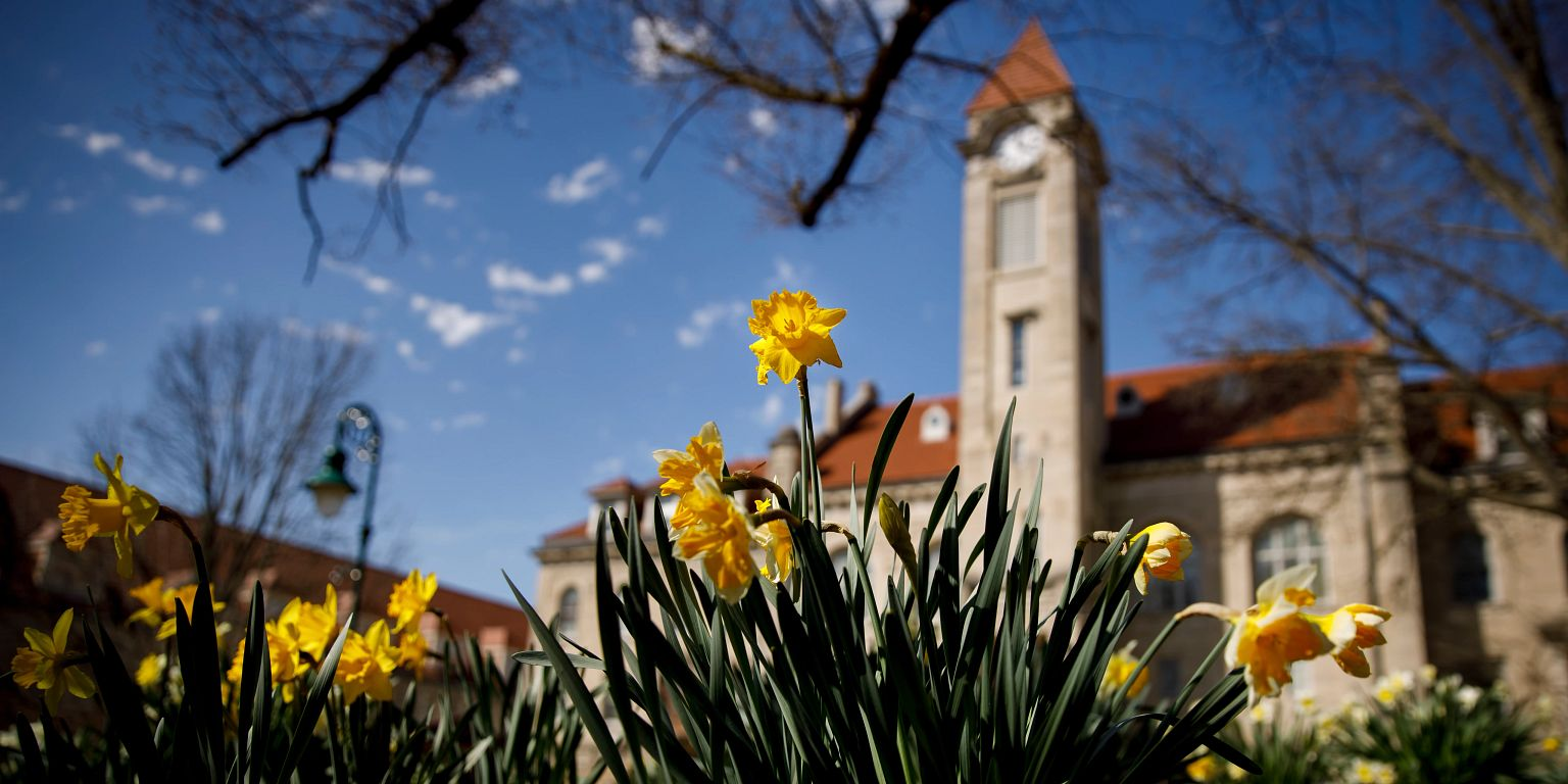 Daffodils in front of the Student Building